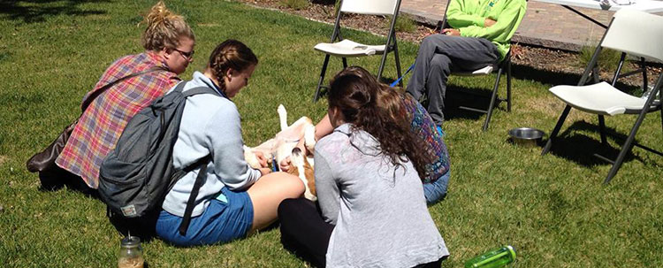 Pets from Haven Humane Society visit campus during finals week